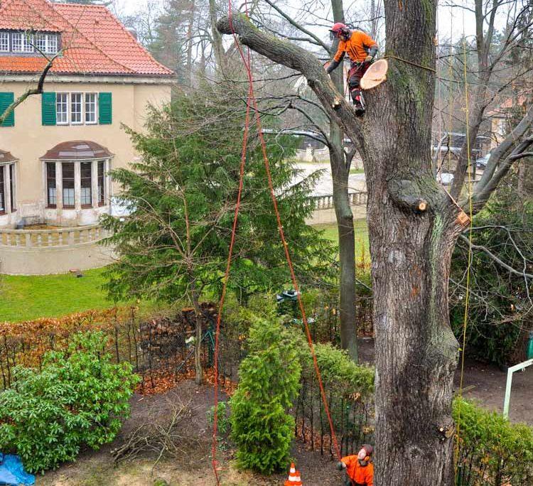 Baumfällung Baumpflege Neumann