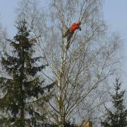 Baumpflege Neuamnn, Seilklettertechnik