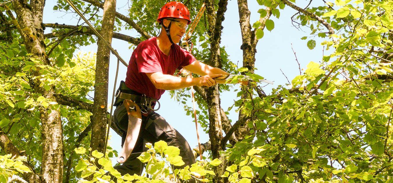 Baumpflege Neumann Pflege im Sommer